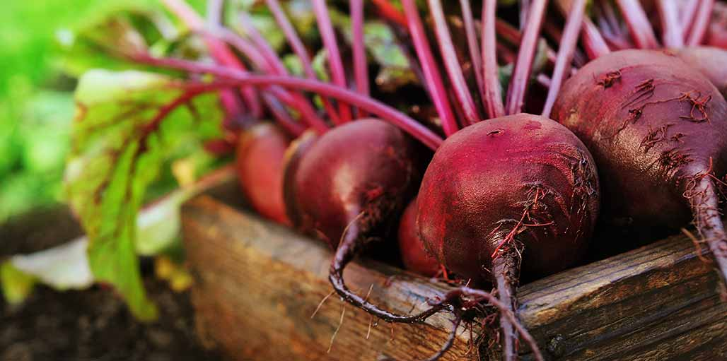 Raw beetroot in a box sitting on soil